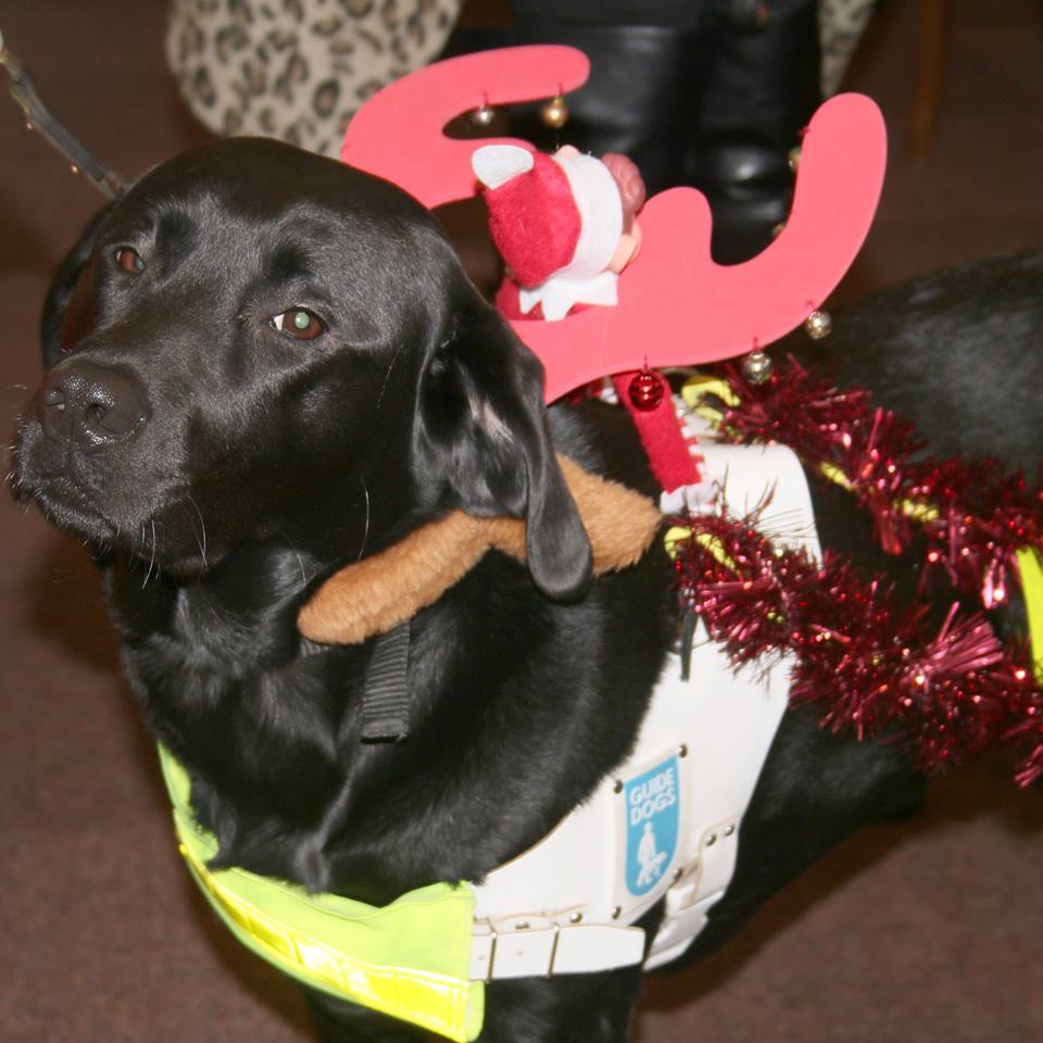 Tilly dressed up as a reindeer with tinsel